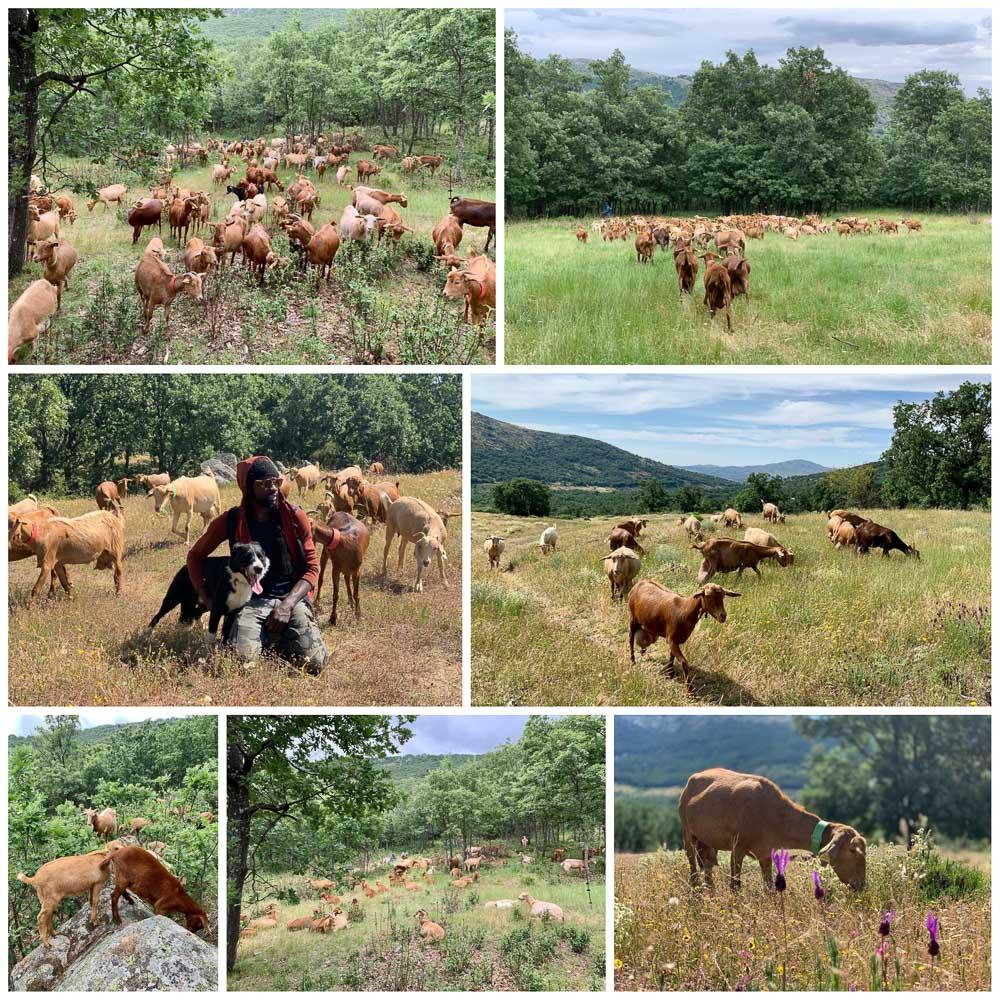 El oficio de pastorear es milenario